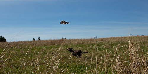Canine Crew - In The Field | SportingDog Adventures