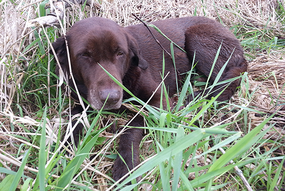 Soggy Acres Dixie Belle | SportingDog Adventures