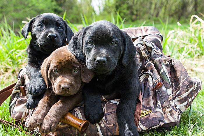 Future Canine Crew Members