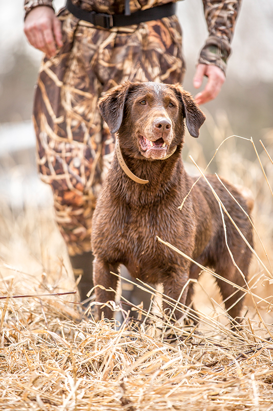 HRCH Soggy Acres Picketts Charge MH (Pickett) | SportingDog Adventures