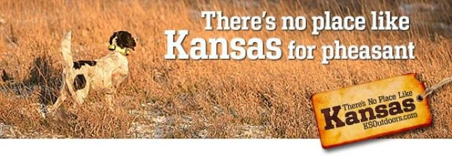Kansas Pheasant | SportingDog Adventures
