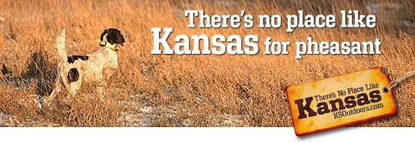 Kansas Pheasant   SportingDog Adventures