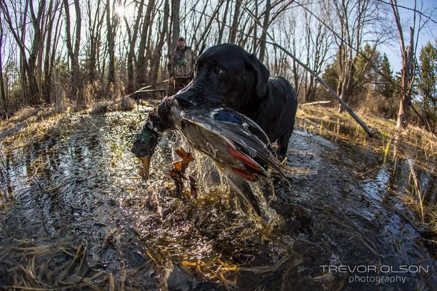 The Retrieve | SportingDog Adventures