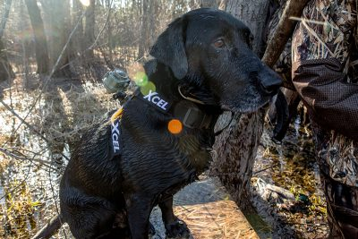Rommel | SportingDog Adventures