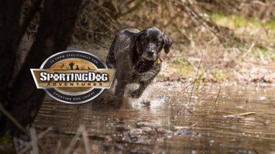 Season 7 - Episode 2 | SportingDog Adventures