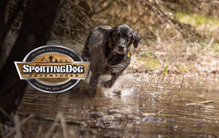 Season 7 - Episode 2 | SportingDog Adventures